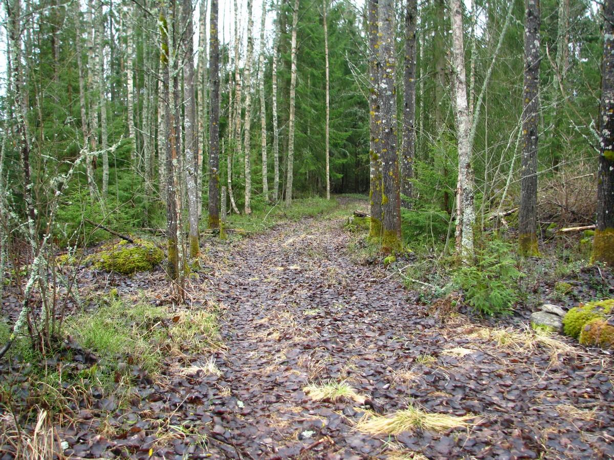 Vårlig skogsstig