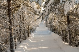 Vinterväg till någon villa på Kalotlandet