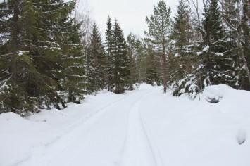 Tyst och stilla i skogen