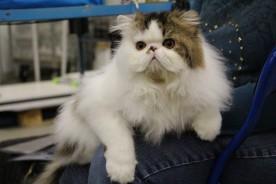 Detta visade sig vara en katt från Pampas