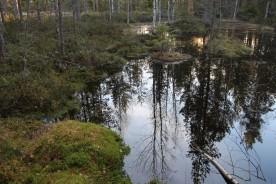 Skogens galleri