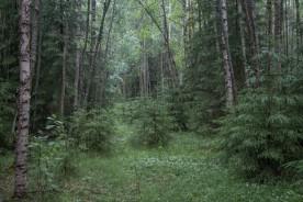 Regnvåt skog