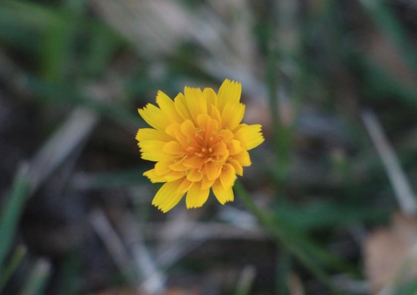 sista blomman