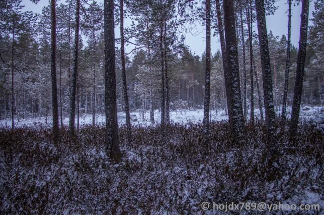 skogen 2