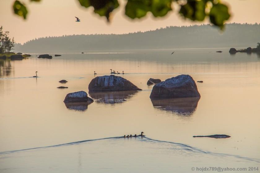 oxkangar natur 2014_9