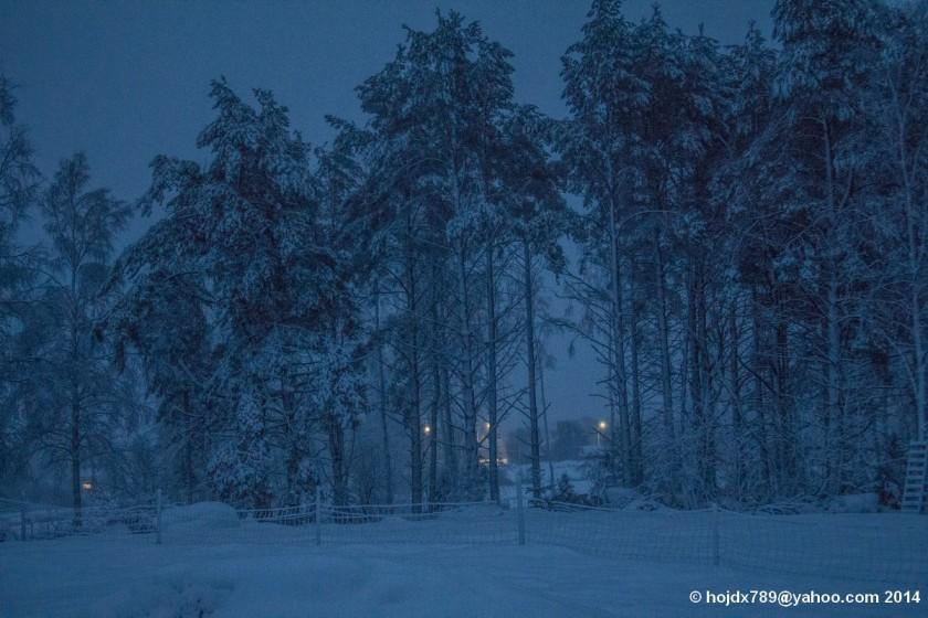 vinterskog