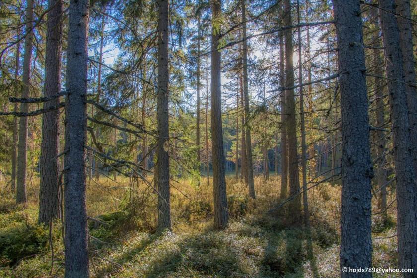 2015-09-26 Skogsbild