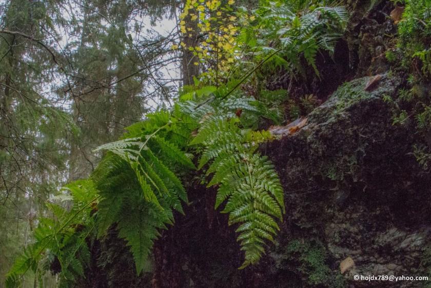 skogsväta