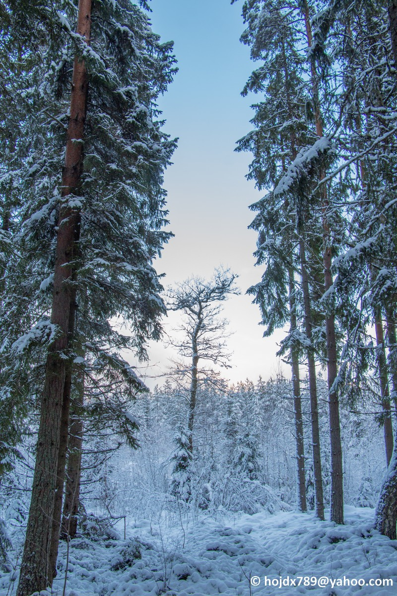 2015-11-22 Snö skog 015mod
