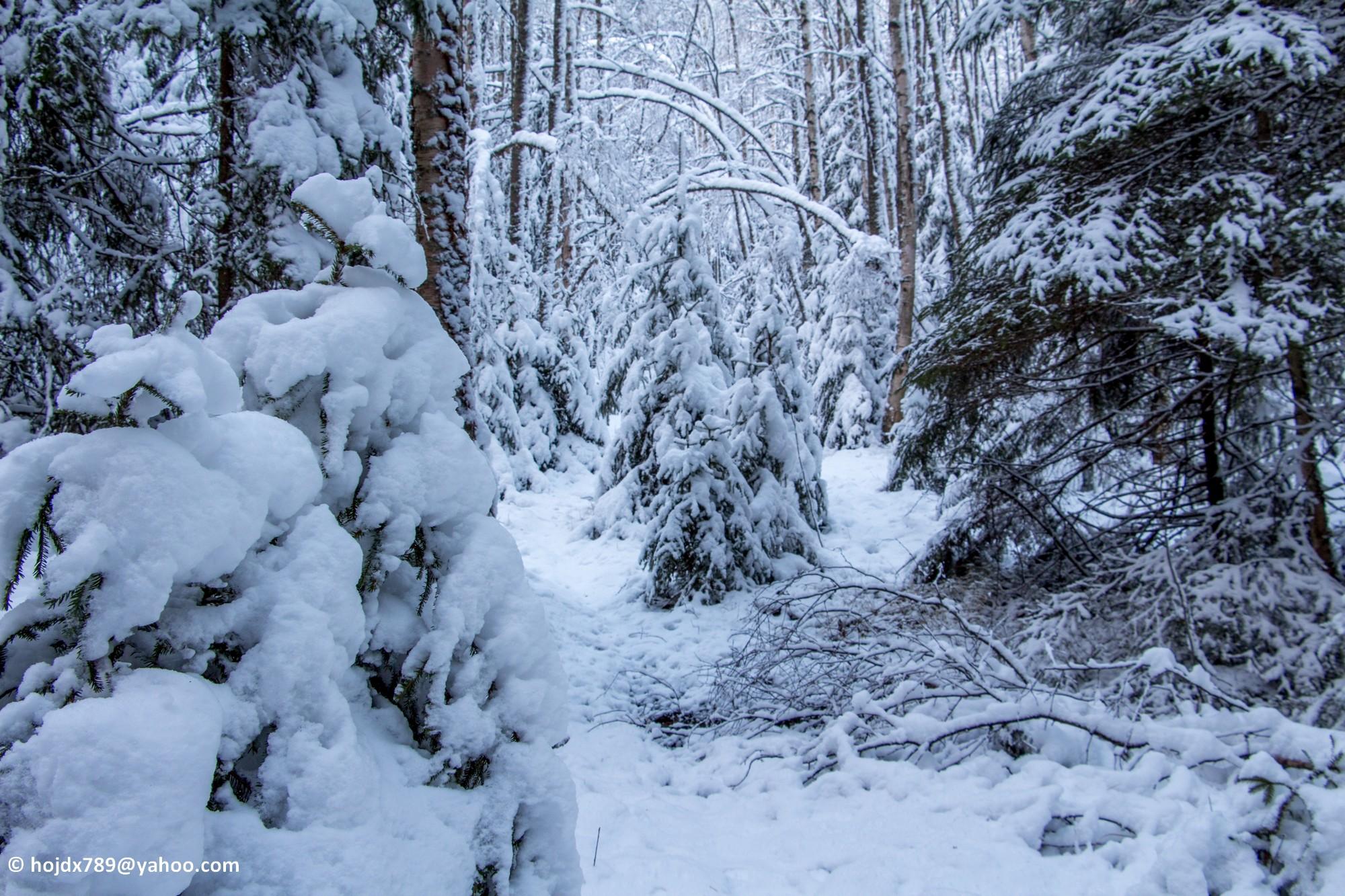 2015-11-22 Snö skog 020-1