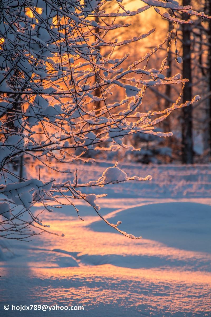 2016-01-21 Soliga snöbilder 006-1