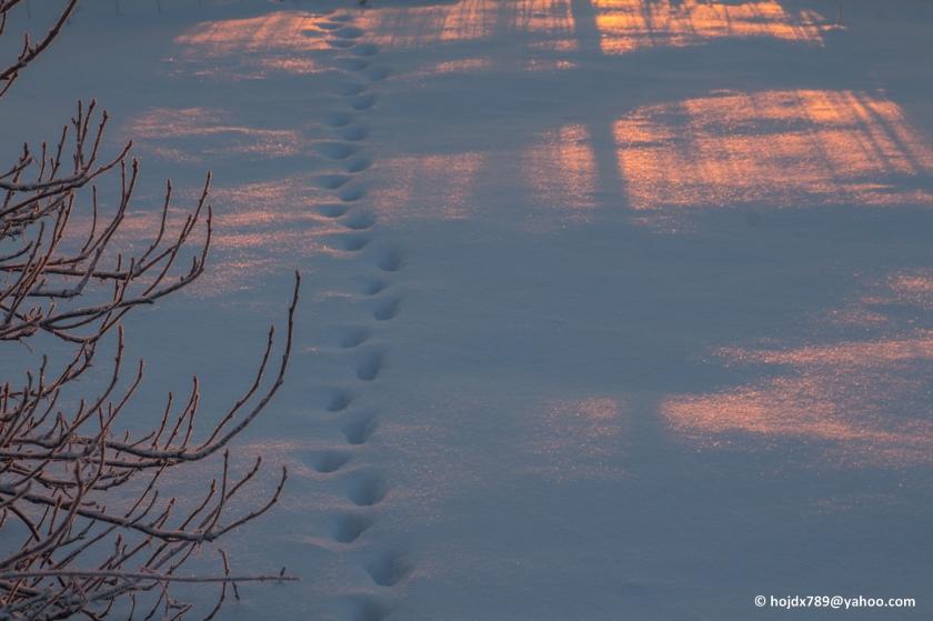 2016-01-29 Morgonsol på snö 008-1