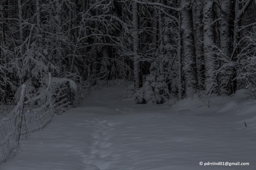 2016-02-12 Vinter och snö 003-1