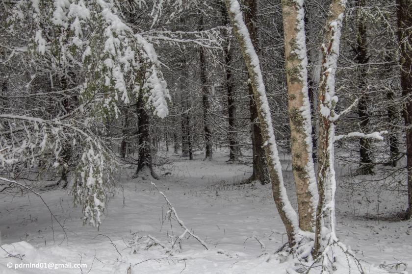 2016-02-12 Vinter och snö 045-1