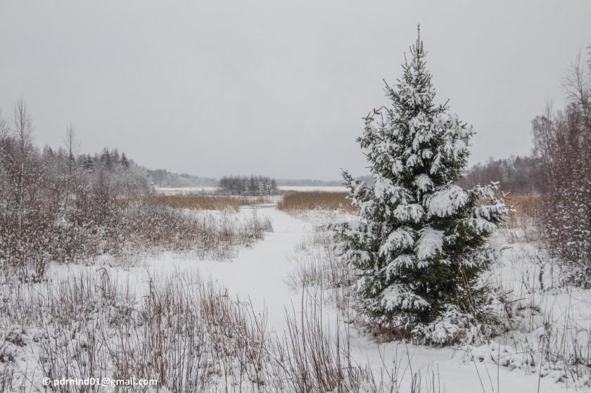 2016-02-12 Vinter och snö 050-1