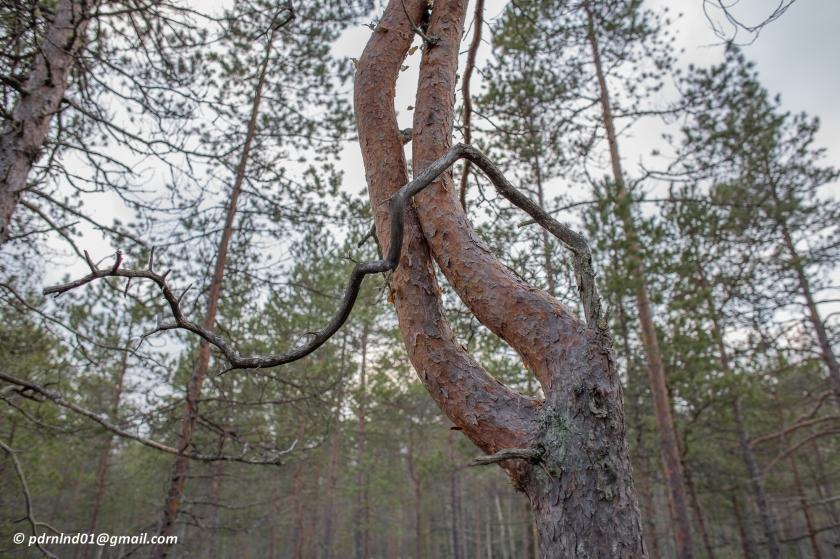 Vinter i skog